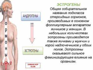Как понизить андрогены у женщин