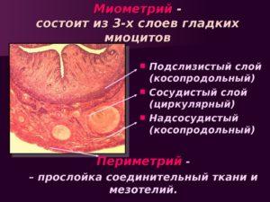 Что такое миометрий