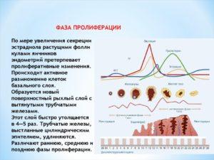Пролиферация эндометрия что это такое
