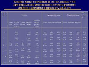 Размер здорового яичника у женщин