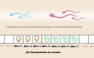 Как узнать день овуляции для зачатия