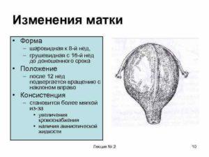 Что означает грушевидная форма матки