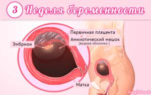 3 недели беременности