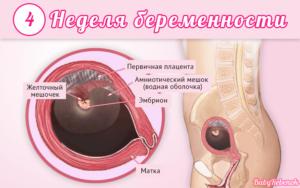 4 недели беременности