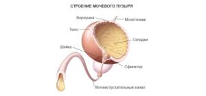 Спазм мочевого пузыря у мужчин