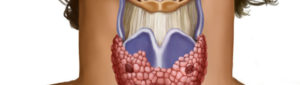 Щитовидная железа и бесплодие у женщин