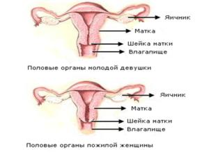 Расстояние от влагалища до матки