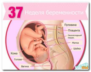 37 недель беременности: предвестники родов, болит поясница