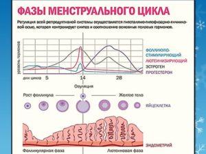 Фазы цикла у женщины по дням
