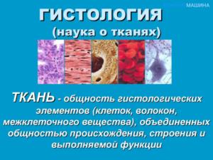 Гистология в гинекологии