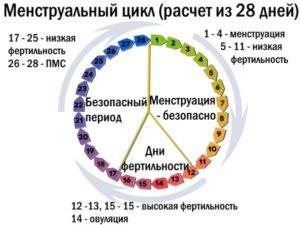 Сколько дней цикл у женщины