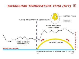Температура перед месячными