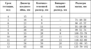 Желточный мешок при беременности: норма, размеры по неделям