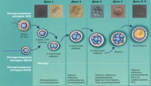 Подготовка к переносу эмбрионов при эко