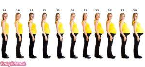 Когда начинает расти живот при беременности