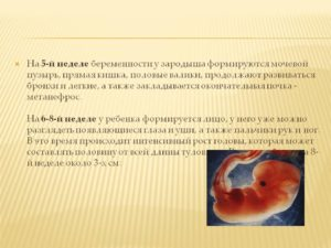 5 недель беременности